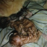 My Lovely Cat Has Child, My Lovely Cat Has Child, Jurnal Suzannita