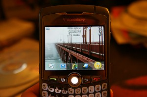 , Blackberry dan Saia, Jurnal Suzannita