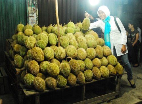 , Cerita Tentang Durian, Jurnal Suzannita