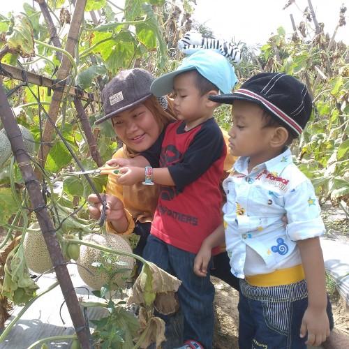 Wisata Kebun Melon di Palembang