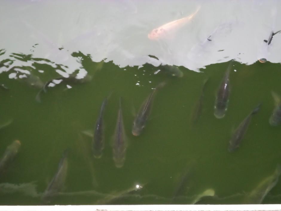 Memberi makan ikan di danau