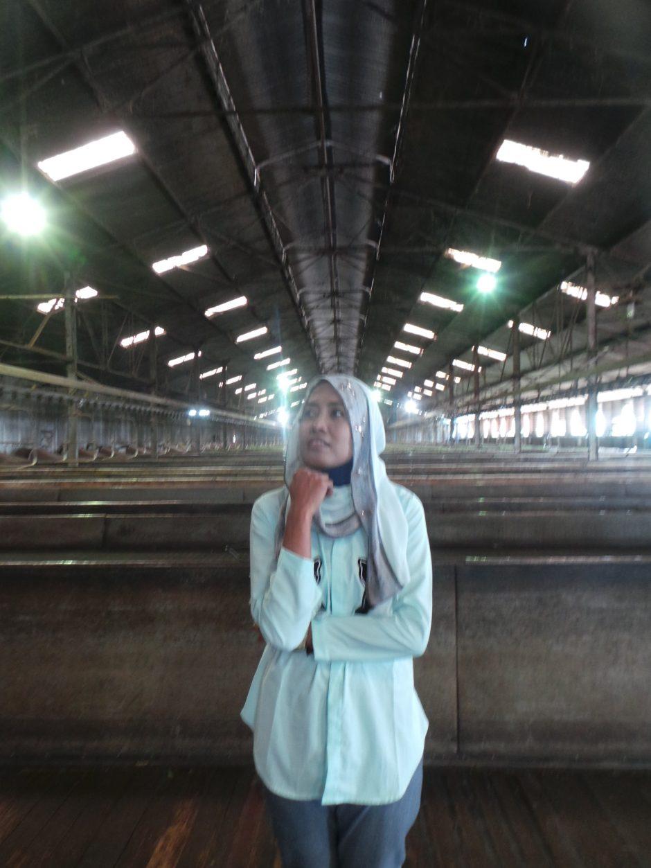 Melihat Produksi Teh Pagaralam di Pabriknya, Melihat Produksi Teh Pagaralam di Pabriknya, Jurnal Suzannita