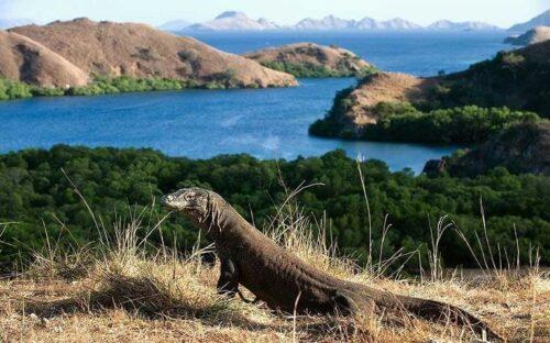 Tiket Masuk Pulau Komodo, Segera ke Pulau Komodo Sebelum Tiket Masuk Seharga Motor, Jurnal Suzannita